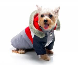 accesorios-para-perros-para-el-movil-7