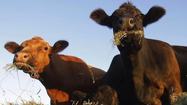alim. animales de granja