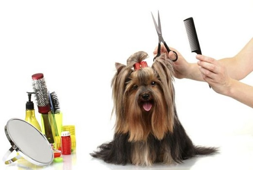 cortar-pelo-mascota-600x400