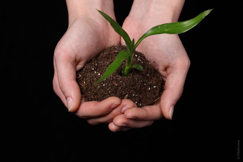 plantas y semillas