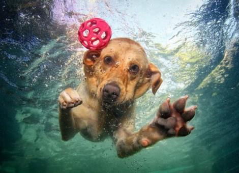 Cuidados-perros-agua-4-CIM-Formacion