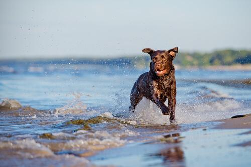 perro-en-el-agua