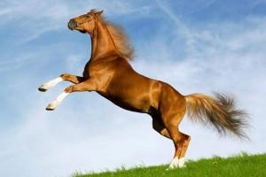 donde-viven-los-caballos
