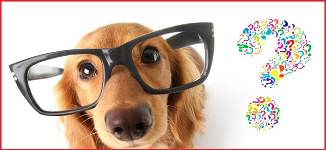 curiosidades-perros