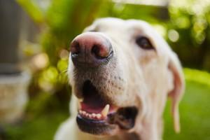 tumores-en-la-boca-del-perro